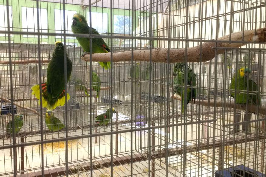 PM Ambiental multa criadouro de animais silvestres na Grande SP