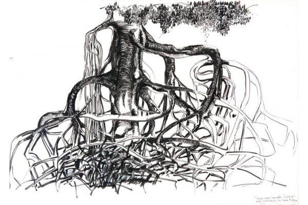 PESM assegura proteção dos manguezais em SP