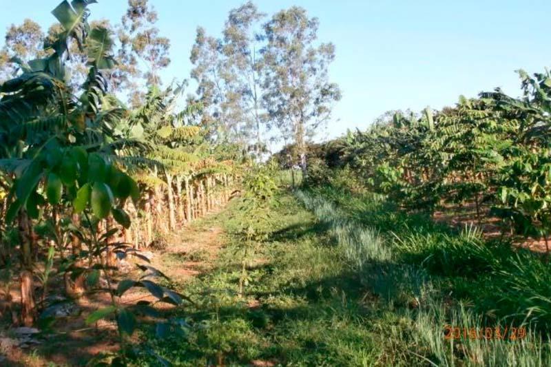 Agrofloresta concilia conservação e produção sustentável
