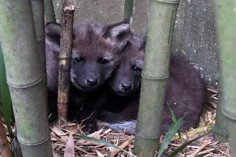 Zoológico de São Paulo ganha dois novos habitantes