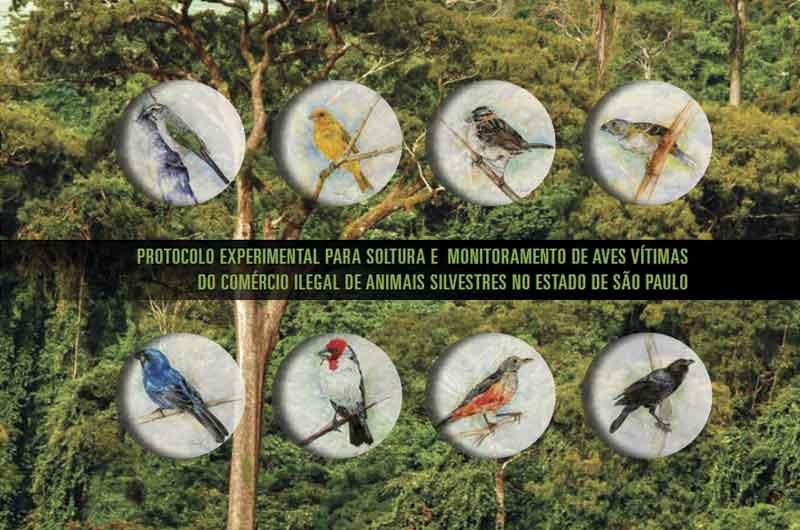 Aves vítimas de tráfico ilegal ganham protocolo de soltura