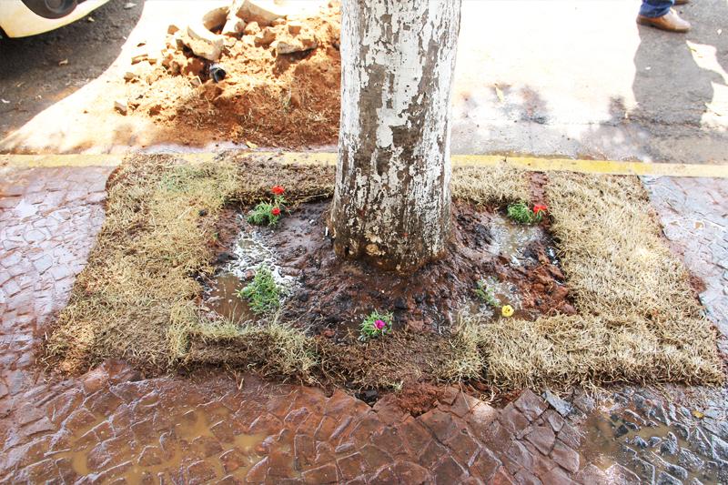 Município VerdeAzul propõe libertação das árvores