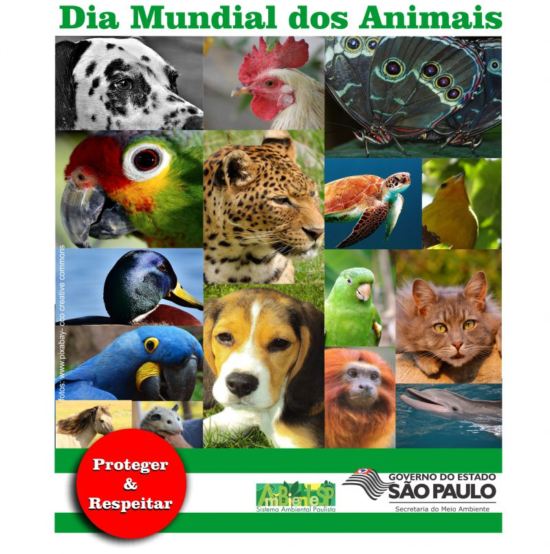Comemore o Dia dos Animais no ZooSP