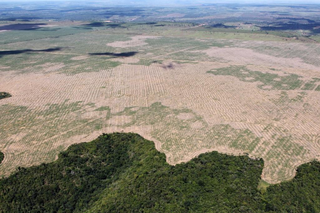 Estudo avalia impacto do desmatamento zero na economia brasileira