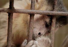 Documentário alerta para o tráfico de animais no Brasil