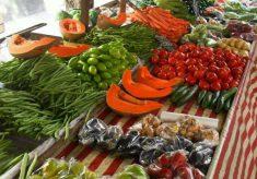 Produtos em transição agroecológica adquiridos em compras públicas