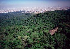 Alta-Trilha-da-Pedra-Grande-02-235x164 Treino Trail Teiú - Serra da Cantareira - Núcleo Pedra Grande